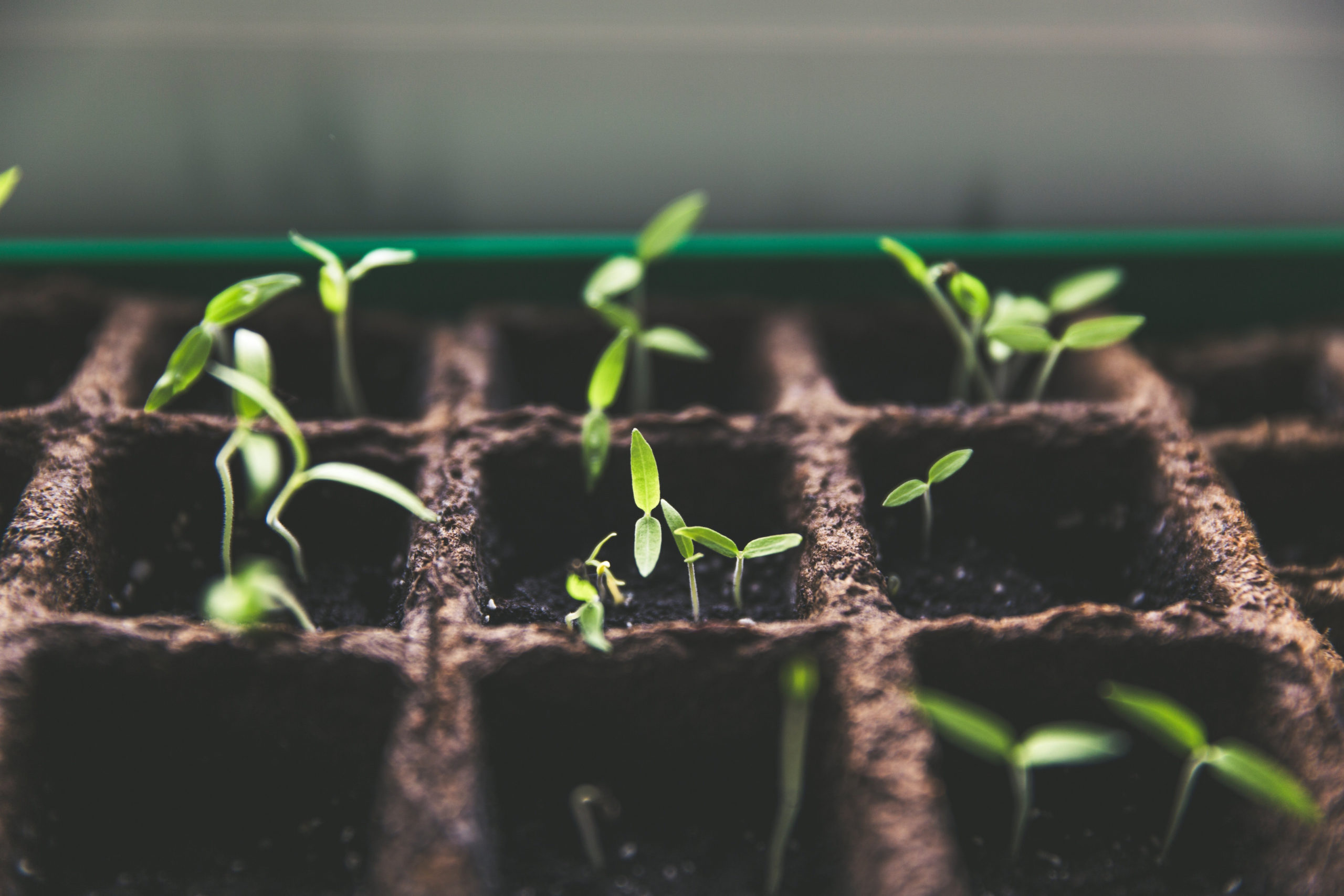 Growing in Grace, Links from around the web, Blogs that encourage spiritual growth, reformed